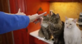 Deaf Cat Learns Sign Language from Woman with Hearing Loss